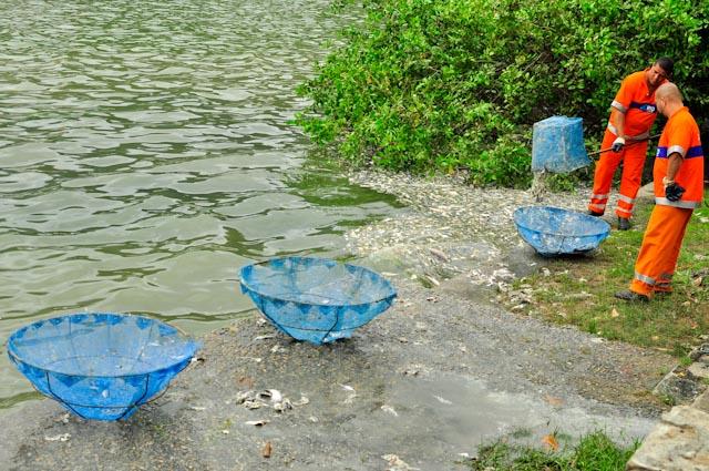 La falta de oxígeno causa la muerte de miles de peces en la laguna    La falta de oxígeno causa la muerte de miles de peces en la laguna
